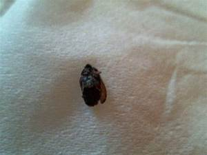 need id assistance got bed bugs bedbugger forums With bed bug casings