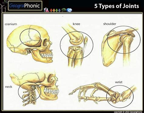 5 Types Of Joints