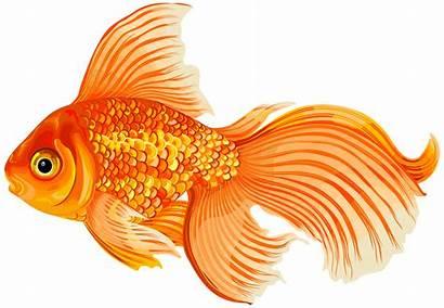 Fish Clip Transparent Clipart Goldfish Underwater Cartoon