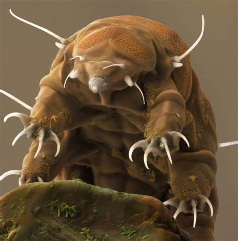 tardigrades aka water bears are actually snatchers 919   ad 189358893 e1448800092991