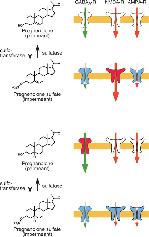 Sulfation regulates the direct modulation of ligand-gated ...