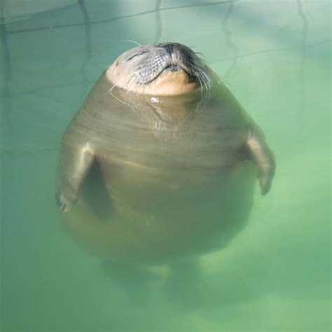 relaxed seal   swimming pool  cute