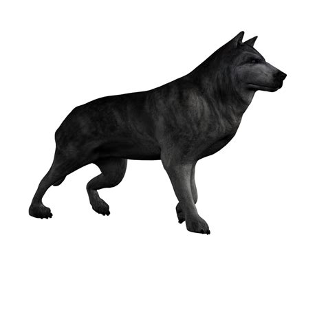 Wolf Png Stock 2 By Direwrath