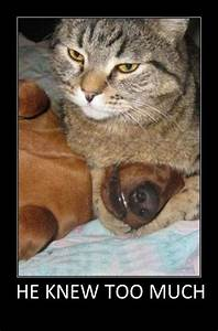 232 best Funny Cats & Animals images on Pinterest ...