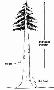 3 2  Determining Tree Diameter