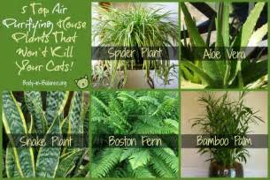 houseplants that are safe for cats top 5 air purifying house plants that won t your cats
