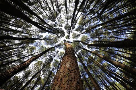 trip  spot selfie instagram   bantul hutan pinus