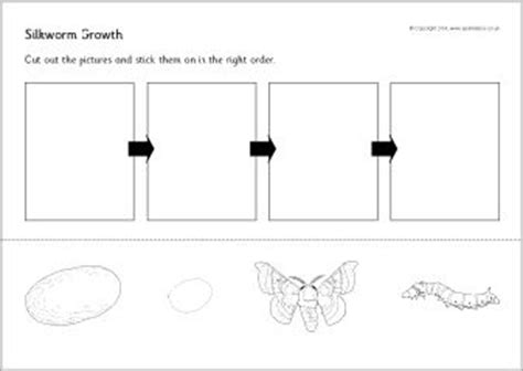 silkworm cycle worksheets 2nd grade silkworm cycle cut and stick sb10985 sparklebox