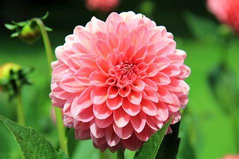 fiori per matrimonio luglio fiori per un matrimonio a luglio per un perfetto si