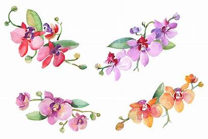 Watercolor Orchids Clipart Orchid Branch Graphic Mystocks