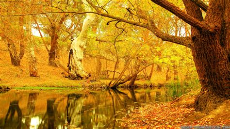 Fall Backgrounds Yellow by Yellow Autumn Tree Wallpaper 2560x1440 32579