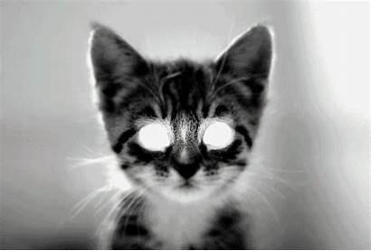 Scary Cats Funny Really Silly Creepy Kittens