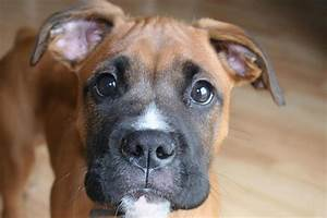 Boxer Dogs Funny Quotes. QuotesGram