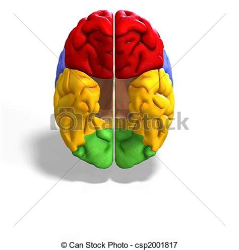brain colored lines stock illustrations of colored brain schematic