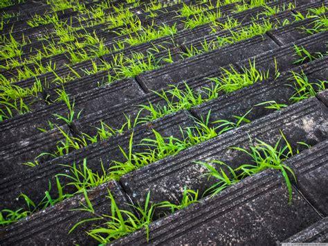 stairs  grass  hd desktop wallpaper   ultra hd