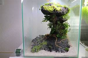 Co2 Rechner Aquarium : dinofu flowgrow aquascape aquarium database ~ Orissabook.com Haus und Dekorationen