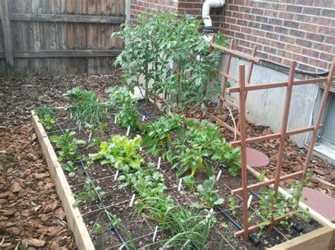 beginner vegetable garden gardening classes denver beginner vegetable gardening how to start gardening in raised beds