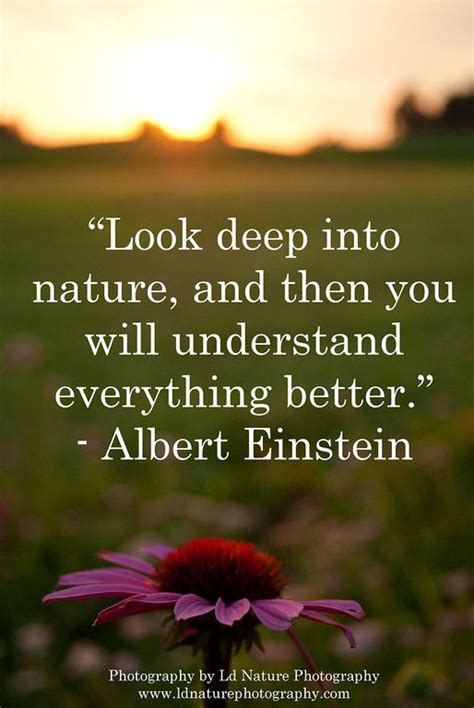 60 Best Nature & Photography Quotes Images On Pinterest