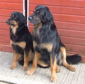 Cheap dog kennels dublin cat kennel kildare dog boarding for Cheap dog kennels for large dogs