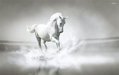 Horse Pure Wallpapers Windows Animals