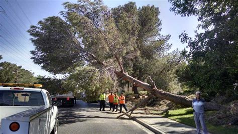 Tree Removal Service In Las Vegas  Mr Tree Lv. Web Based Dispatch Software Sedan Car Prices. Consumer Reports Carpet Steam Cleaners. Imperial Electric Company Gateway Credit Card. Credit Score Needed For Va Loan. One On One Web Hosting Reviews. American Bank Credit Card Carrier A C Systems. How To Level A Refrigerator Hsa Without Hdhp. Freeze Liposuction Before And After