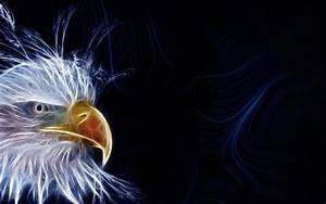 Águila de luz 1680x1050 :: Fondos de pantalla y wallpapers