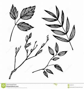 Hand-drawn Vector Illustration - Set Of Leaves. Ink And ...