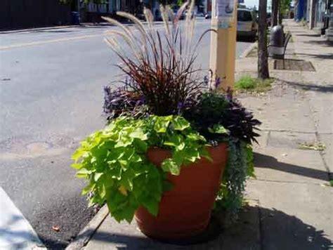 big flower pot arrangements garden pots gardening with my son pinterest