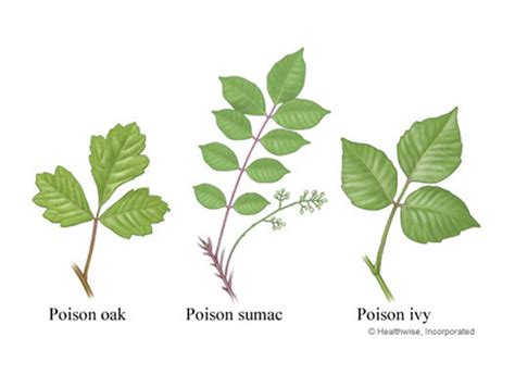 Protect yourself from poisonous plants