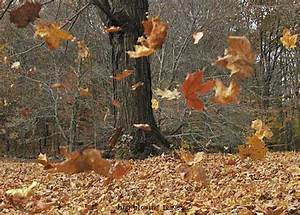 Fall Leaves Blowing Pictures