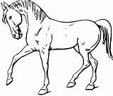 Coloring Horse Walking Pages sketch template