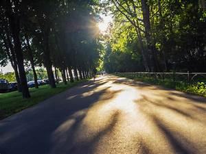 Free, Images, Image, Tree, Nature, Natural, Landscape, Sunlight, Sky, Asphalt, Light, Morning