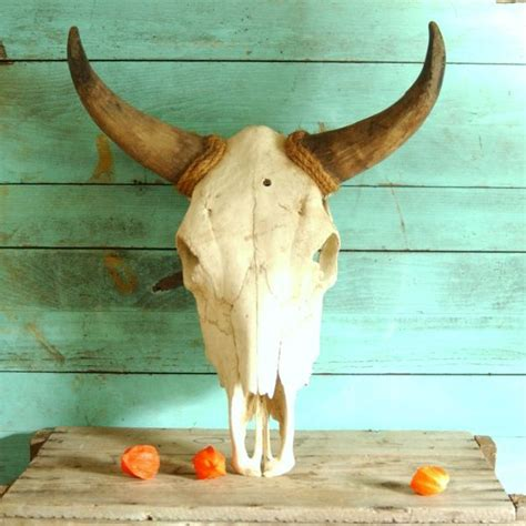 vintage real steer bull  head skull  horns