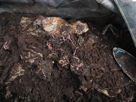 kompost archive lebensraum permakultur