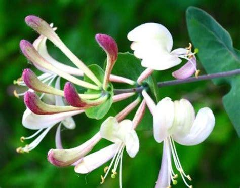 fiori per il giardino fiori giardino piante da giardino fiori per il giardino