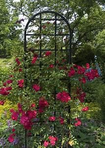 Rankhilfe Rosen Freistehend : freistehende rosen rankhilfe burlington aus metall 200 cm im shop ~ Orissabook.com Haus und Dekorationen