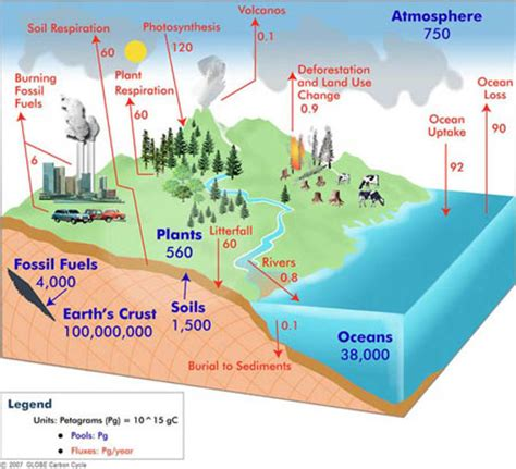 Define Carbon Sink Geography by Carbon Dioxide Part 3 A Global Look Globe Scientists