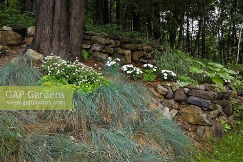woodland border plants gap gardens sloped woodland border planted with festuca grass plants yellow lysimachia and
