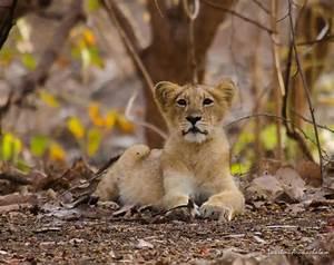 Complete List Of National Parks  U0026 Wildlife Sanctuaries Of