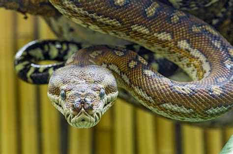 7 Things You Didn't Know About Australian Snakes and How ...