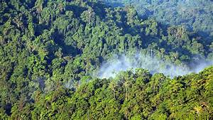Stakeholders urged to protect West Africa's Guinea Forest ...