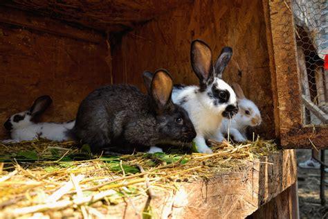 stall für kaninchen hasenstall selber bauen diy tipps kalaydoskop