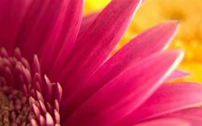 Flower Pink Widescreen Wallpapers 1050 1680