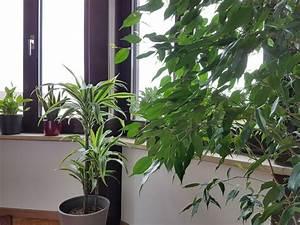 Bewässerungssystem Für Zimmerpflanzen : das beste bew sserungssystem f r zimmerpflanzen schlauer wohnen ~ Markanthonyermac.com Haus und Dekorationen