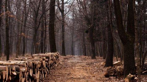 nature Landscape Trees Forest Wood Leaves Path Fall