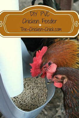 1000+ Images About Chicken Feeders On Pinterest Chicken