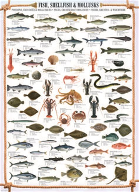 animal charts images   animal kingdom