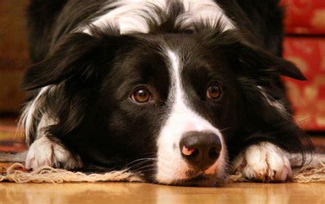 worlds  guard dog breeds