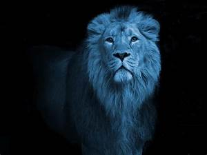 OS/2 resurrected: Blue Lion becomes ArcaOS, details emerge ...