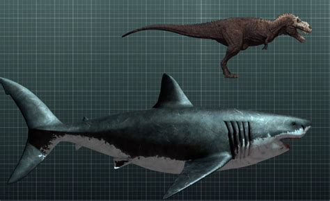Megalodon And Other Sharks